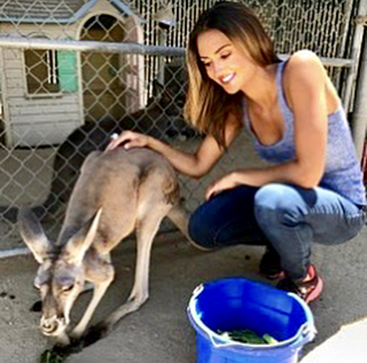 Katie Cleary Helping Animals