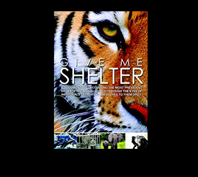 Give Me Shelter - Katie Cleary