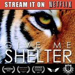 Give me shelter movie