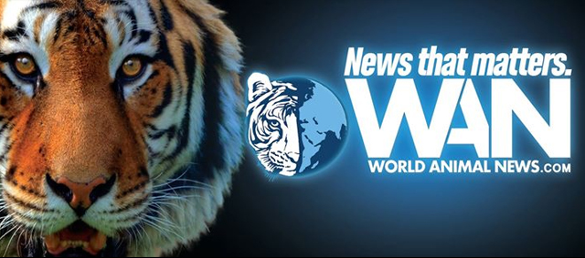 World Animal News